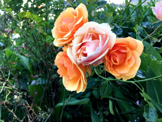 san_francisco_flowers