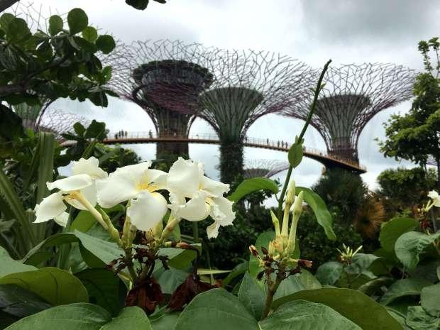 singapur-reisetagebuch-gardens-by-the-bay-makeupinflight-4