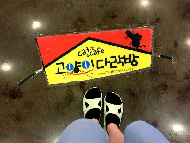 reisetagebuch-seoul-makeupinflight-cat-attic-cafe-10