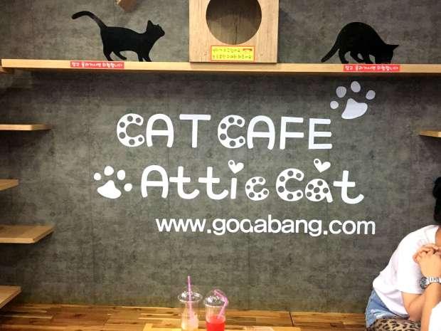 reisetagebuch-seoul-makeupinflight-cat-attic-cafe-11