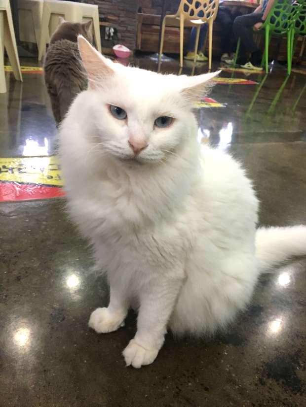 reisetagebuch-seoul-makeupinflight-cat-attic-cafe-13